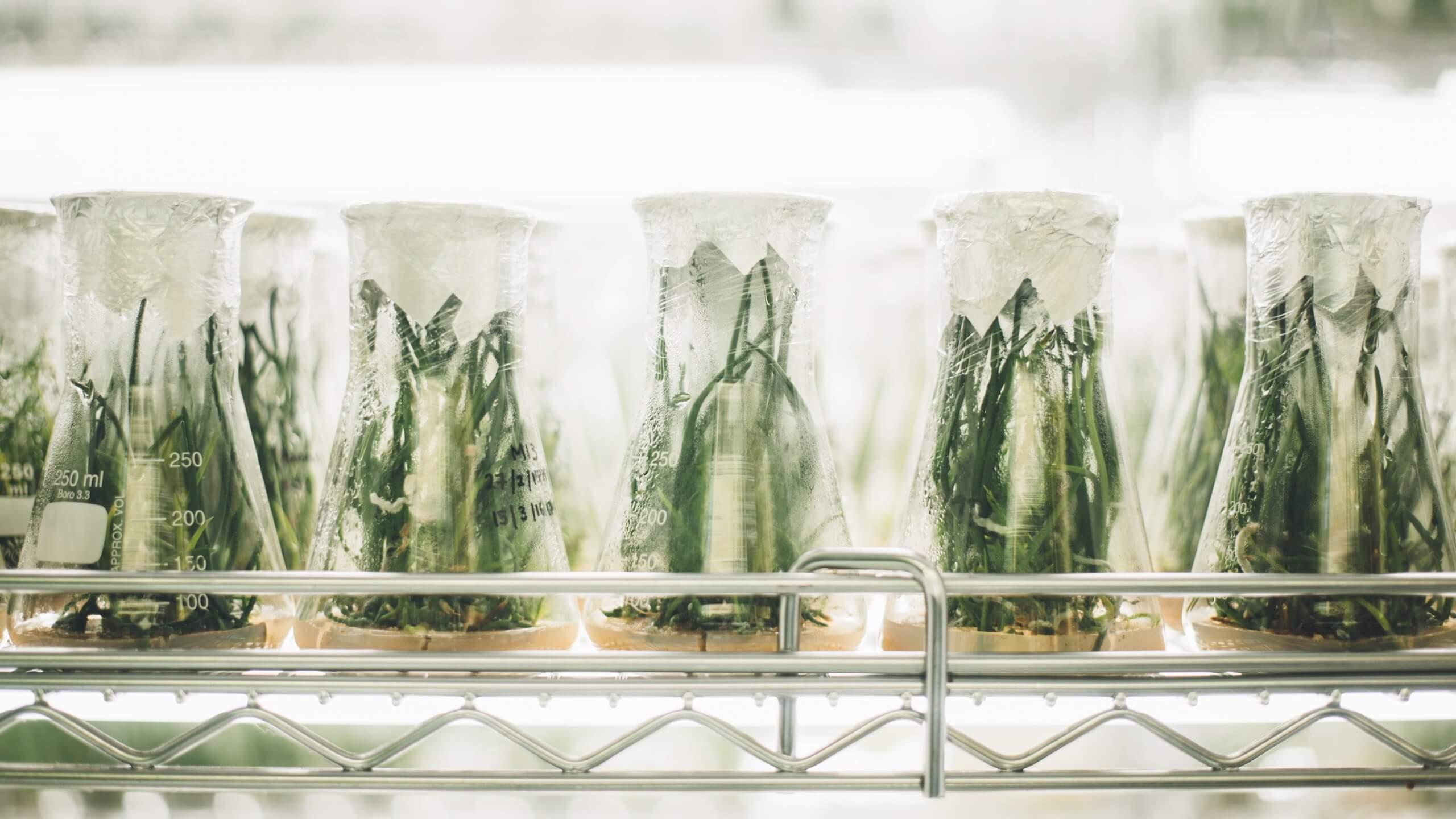 Nauka o korzyściach diet oczyszczających 2